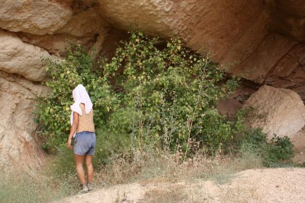אבוטילון הודי Abutilon indicum (L.) Sweet