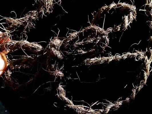 חבל שזור מסיבי גזע של עץ מהדקליים שסיביו שחורים