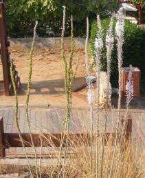 גובה עמוד הפרחים 100-60 ס