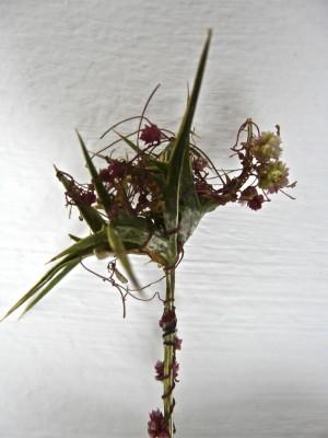 כשות הקורנית Cuscuta epithymum (L.) L.