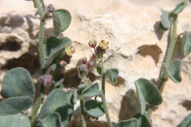 צמחים שעירים ירוקים.
