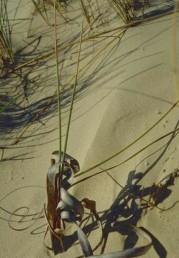 עלי השושנת התחתונים רחבים מהעלים המתפתחים בעת הפריחה.