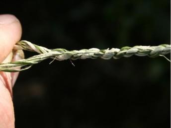 פרק א': הכנת חוטים וחבלים