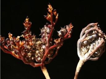 פרק ה': תנועה בצמחים יבשים והפצת זרעים