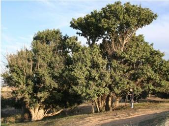פרק ט': עצים שאהבתי