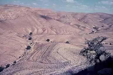 צמחים אוהבי לחות ששרדו בסלעי המדבר (רליקטים)