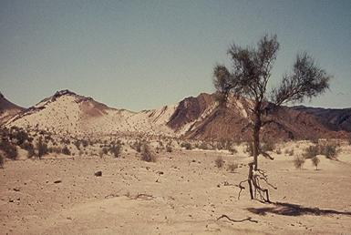 סחיפת חול שיוצב על ידי רוח והשפעתו על צמחים