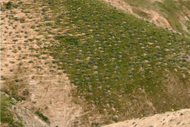 פרק ח': חתכים בצומח של ארץ ישראל: חתך במדבר יהודה