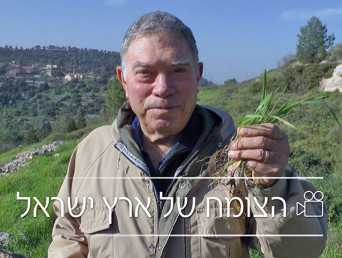 הצומח של ארץ ישראל - קורס וידאו