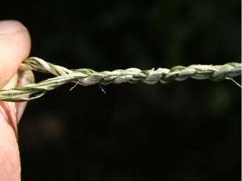 Chapter A: Preparing Cords and Ropes