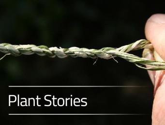 Plant Stories