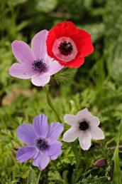 הפרחים מגוונים בצבעם