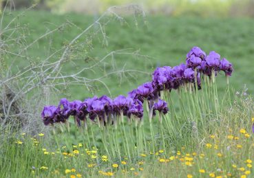 צמחי חולות הנגב המערבי
