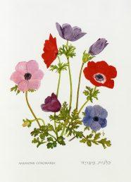 פרחים בצבעים שונים. איור - ברכה אביגד ז