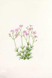 מראה כללי (בפרחים ורודים). איור - ברכה אביגד ז