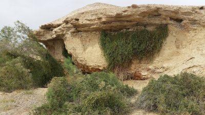 מטפס ירוק עד של המדבר הקיצוני החם