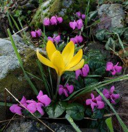 פרח צהוב חורפי