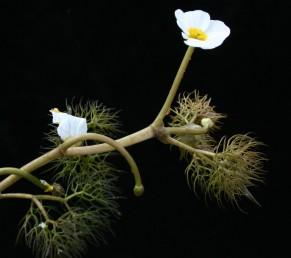 קוטר הפרח 20 מ