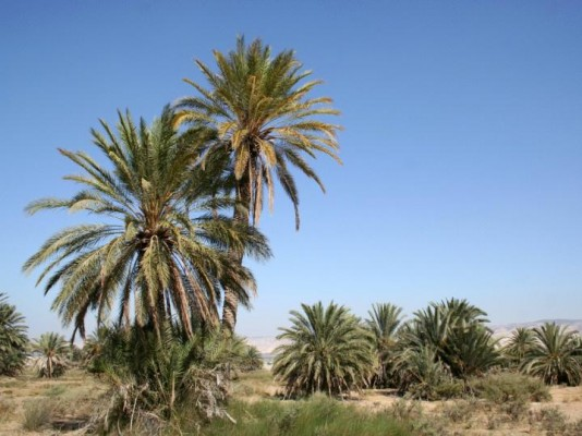 Strings and cords in date-palm country