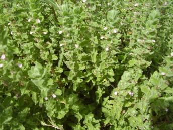 צמחים גבוהים של בתי-גידול לחים.