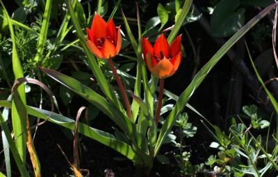 צמחי שטחים בהם כמות המשקעים 800-400 מ