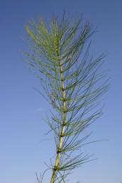 גבעולי הצמיחה נושאים 30-10 סעיפים.