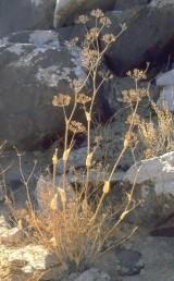 צמחים הגדלים בהר הנגב על קרקעות המתפתחות מחוואר, בזלת וגיר קשה.