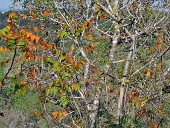 עצים משירי עלים בחורף.