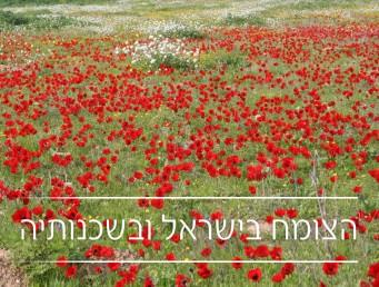 הצומח בישראל ובשכנותיה