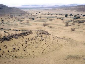 Chapter F: Flora at Shayarot Ridge and Biq'at 'Uvda