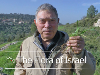 The Flora of Israel - Video Course