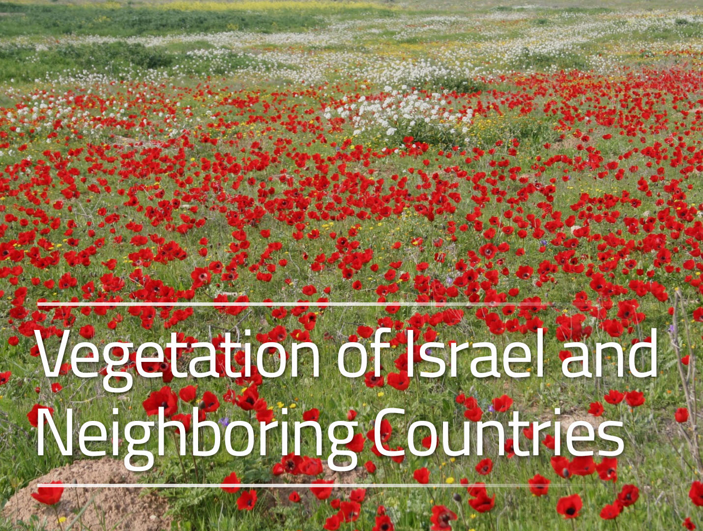 Vegetation of Israel and Neighboring Countries