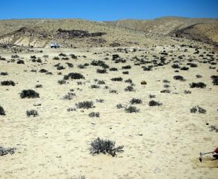 חמד המדבר שולט בשטחים של סרוזיום לסי בטרסת נחל ליד רכס רחמה