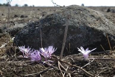 קרקעות כבדות ועמוקות