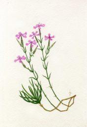 ענפים בעלי עלים, ניצנים ופרחים. איור - ברכה אביגד ז