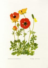 פרחים בצבעים שונים.. איור - ברכה אביגד ז
