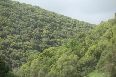 עץ ירוק עד נמוך, שולט בחורשים ים-תיכוניים