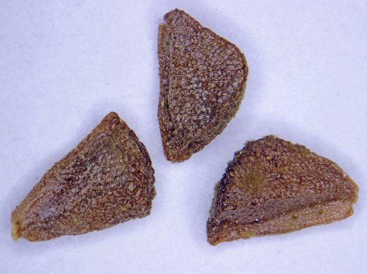 שבר לבן Peganum harmala L.
