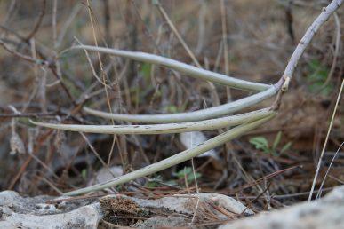 הפירות נישאים על קצה הגבעול הדק