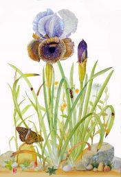 הפרח דו-גוני פחות או יותר, חציו התחתון כהה